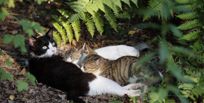野良猫のTNR活動の目的と内容とは