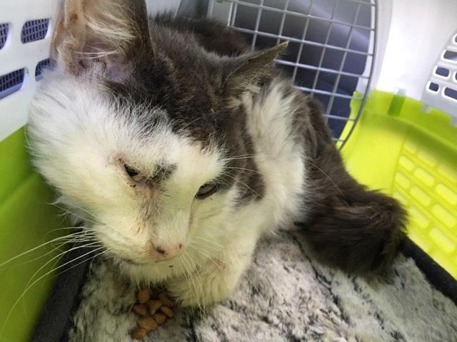路上生活でボロボロになった野良猫、保護されて奇跡の回復を遂げる!