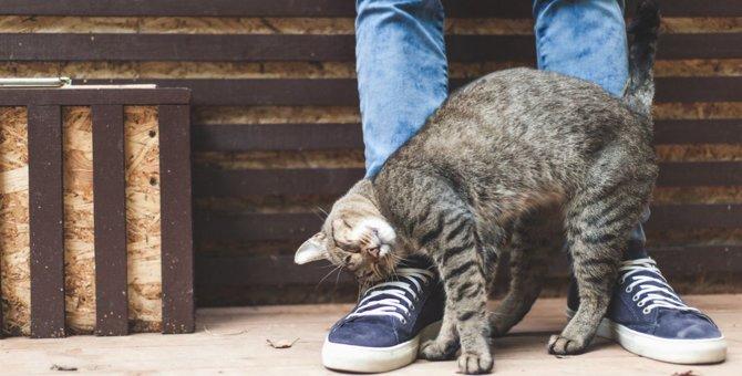 猫が喜ぶコツ 好かれる撫で方や接し方