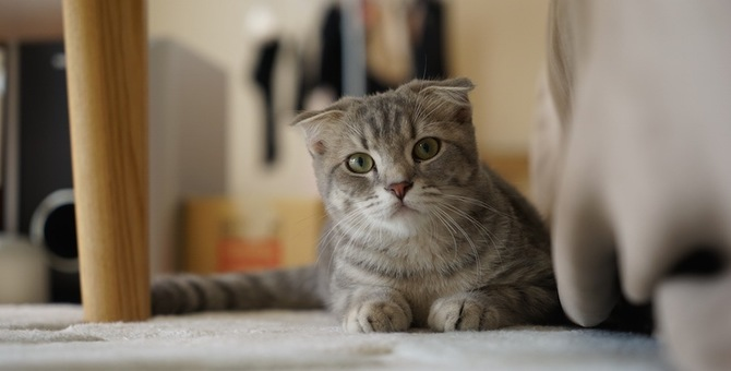 猫が後を付いてこないのはどうして?考えられる6つの理由
