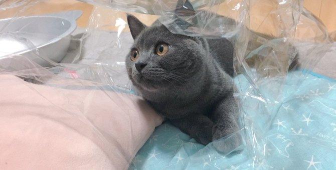 こんな音が好き♡猫が『癒される音』3選