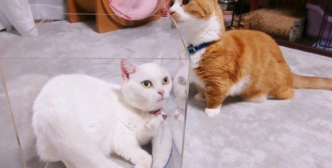 透明な箱に興味津々な猫さんたち!