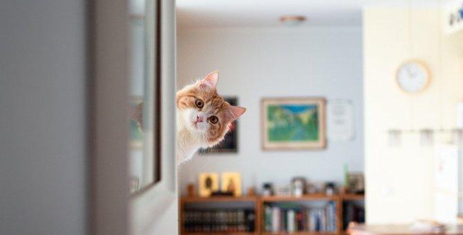 猫と暮らすと『変化すること』6選!猫を飼う前に知っておくべきこととは?