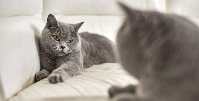 猫にお見合いをさせる方法と注意すべきポイント