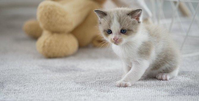 今すぐ見直して!家の中で猫に危険な場所5つ