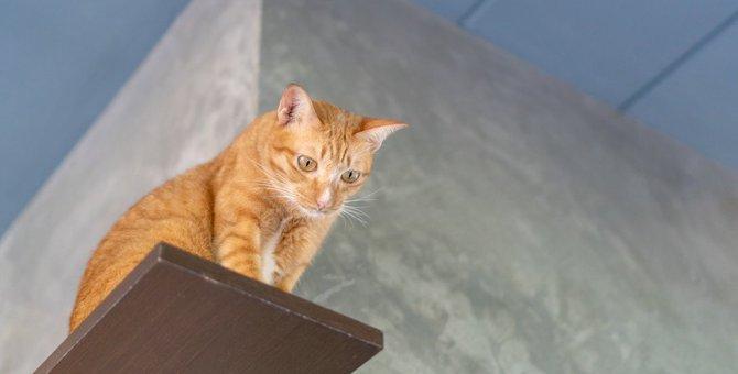 猫がテーブルなど『高いところ』に登るのはなぜ?事故や怪我の予防策4つを解説!