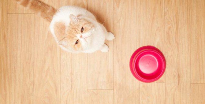 エキゾチックはどんな猫?ショートヘア・ロングヘアの特徴や飼う時の注意点