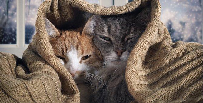 猫が寒いと感じる温度は?快適に暮らすための4つのポイント