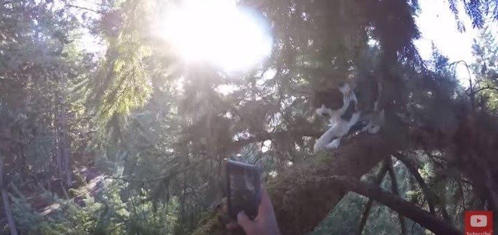 工事の音に驚いて木に登ってしまった猫が5日たっても降りてこない…