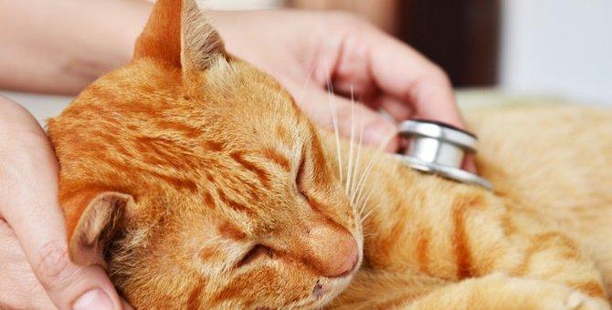 猫が低血糖になっている時の症状や対処法