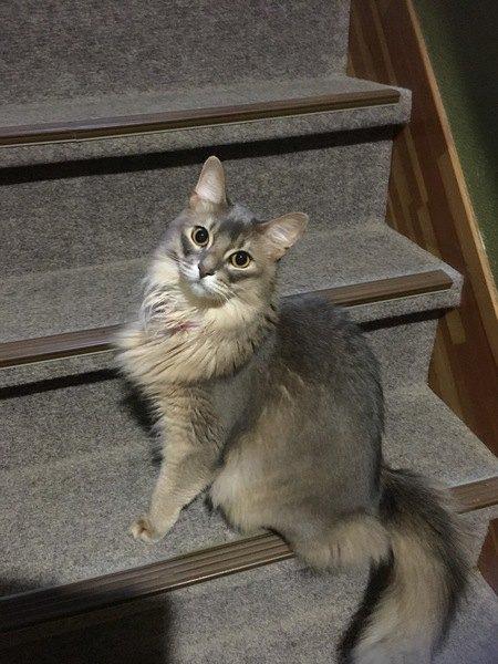 猫だって気を使ってる!飼い主に忖度している猫の行動5つ