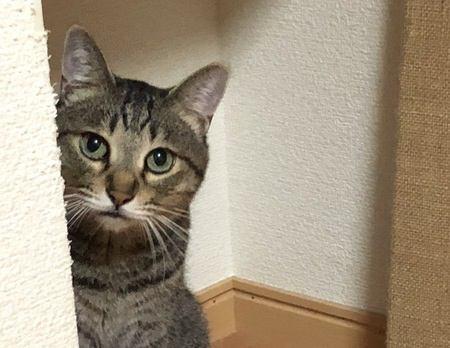 猫には『同情』という感情がある?