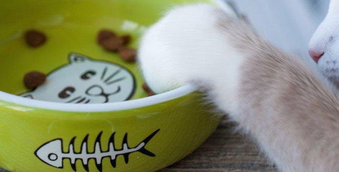 猫がご飯をおねだり!あげちゃいけない時の3つの対処法
