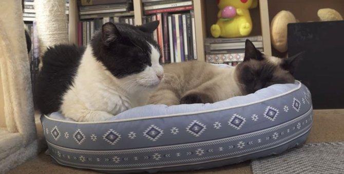 新しい猫ベッドを新調♪それぞれお気に入りの場所でくつろぐ猫ちゃんたち