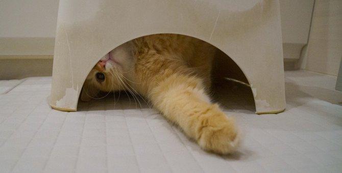 猫が『お風呂』についてくる5つの意味