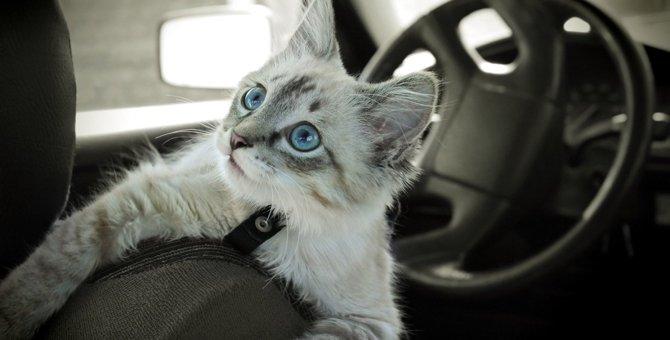夏場の『猫連れ外出』でぜひ行いたい暑さ対策3つ