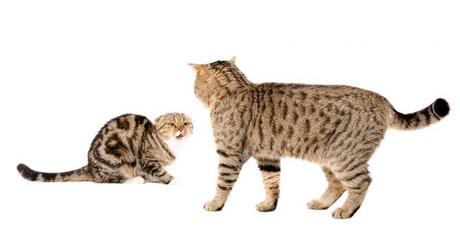 猫が『自分の方が弱い』と悟ったときにする行動4つ