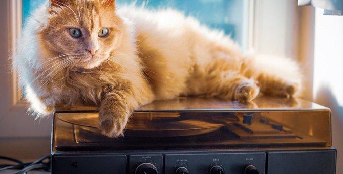 猫が好きな『音楽ジャンル』4つ