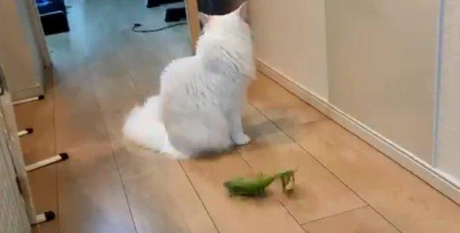 遊んでくれると思いきや「スル―」猫さんの塩対応に【爆笑】