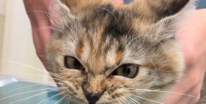 病院に連れて来られた猫が激おこ!怒っててもかわいい姿が話題に