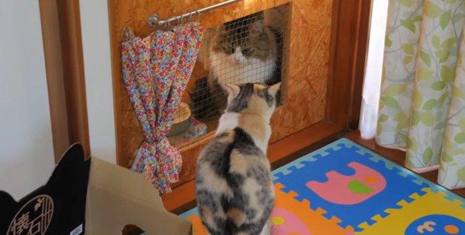 猫ちゃんたちの『密会現場』をこっそり観察してみた結果