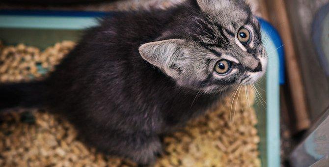 猫がトイレで鳴く理由とは 気をつけるべき病気とその対策