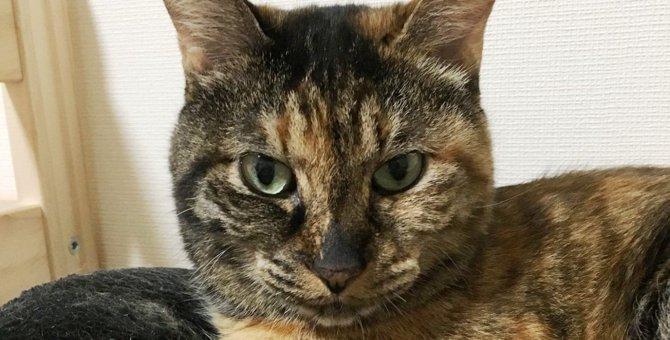 亡くなった愛猫が「悪い因縁」を持って行った|Laylaのペットリーディング