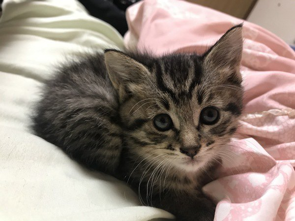 猫が飼い主をじっと見つめている時に考えられる要求5つ