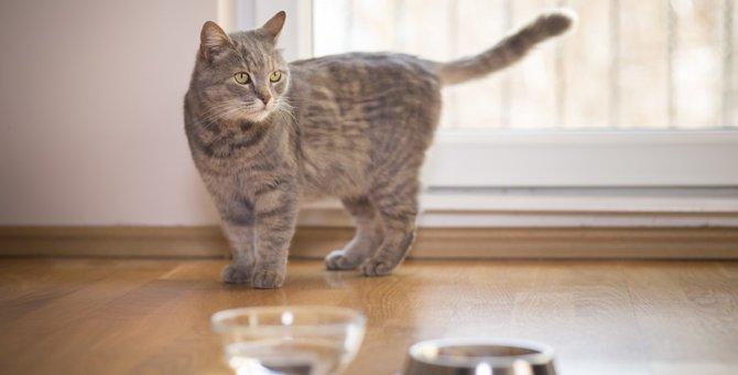 猫がお水を飲んでくれない時に試してほしい6つの事