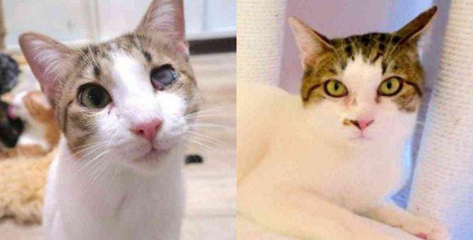 多頭飼育崩壊から緊急保護…兄弟猫の未来は?