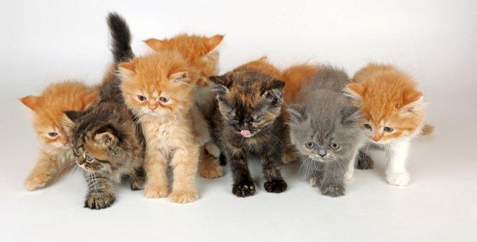 猫展の開催情報まとめ