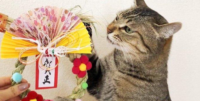Laylaの12猫占い 12/30~1/5までのあなたと猫ちゃんの運勢