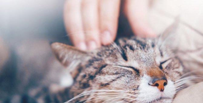 猫がかまって欲しくない時にする5つの仕草
