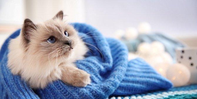 鼻がぐずぐずと辛そう…猫の『鼻水』が出る4つの原因と対処法