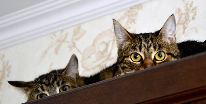 お家の中でも危険はいっぱい!ヒャッとする猫の行動