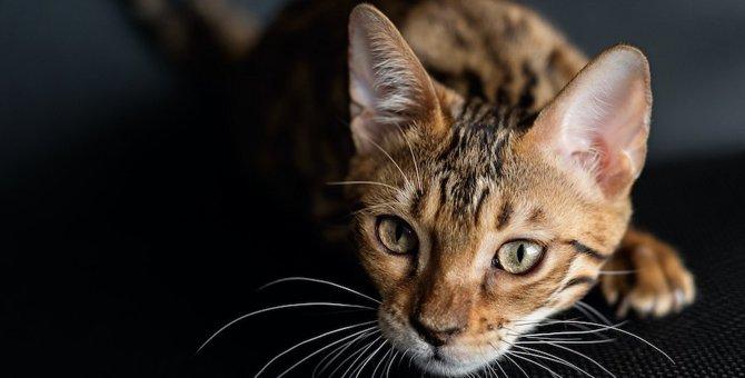恐怖心を抱いているのかも…飼い主を攻撃してくる猫の心理3つ