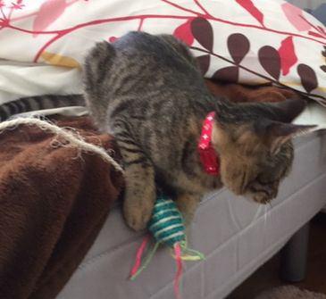 ハンデがあっても気にしない!かわいい猫たちの飼育日記
