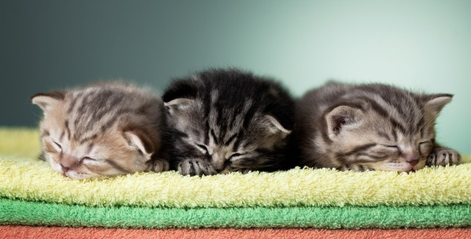 猫が妊娠した際の兆候と過程について