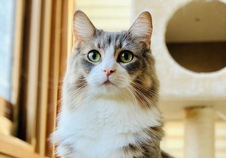 猫を幸せに出来る飼い主が必ずしていること6選