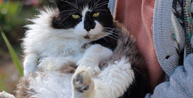 猫がしっぽをブンブン振る5つの気持ち