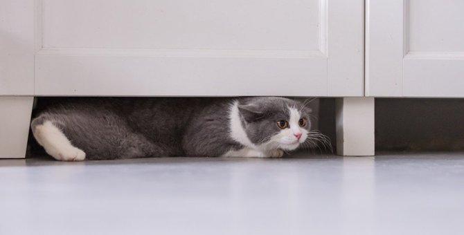猫が怯えている時にする8つの行動