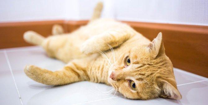 猫が床でゴロンゴロン転がる2つの理由と気持ち
