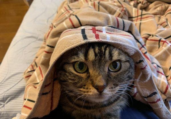 猫がキュンとくる飼い主さんの〇〇