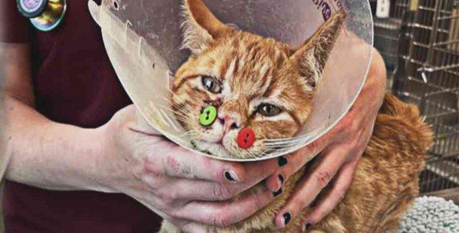 顔に大怪我をした子猫……ボタンを使った治療で奇跡の回復!