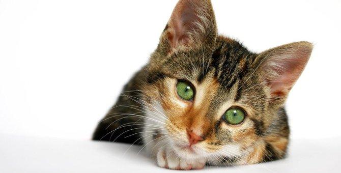 早く気づいてニャ〜!猫が『心細いとき』にみせるサイン3つ