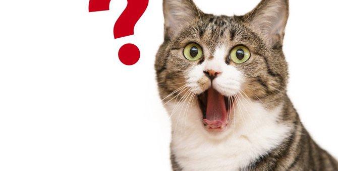 猫は『ちくわ』を与えても大丈夫?注意すべきこと5つ