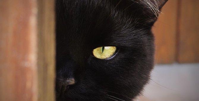 猫にまつわる不思議な話9選