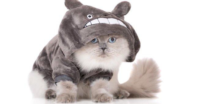猫にも服を着せる?メリットとデメリット