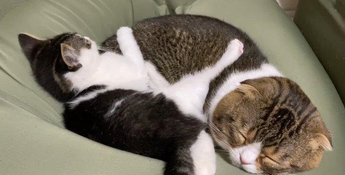 遊び盛りの子猫!疲れて眠る姿がかわいい♡