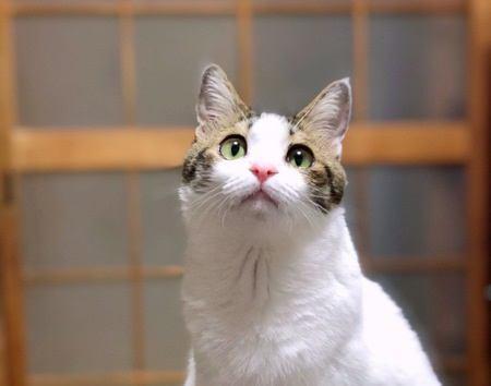 猫がしっぽをゆっくり振る『3つの心理』
